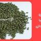 انواع ماش ایرانی
