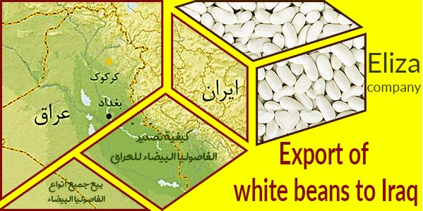 khomein white beans